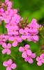 051217-FlowerHDR5