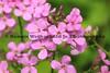 051217-Flower_4772