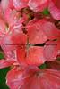 072813_Flower_3033