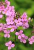 051217-Flower_4776