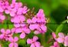 051217-FlowerHDR2