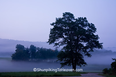 Trees Silhouetted in the Early Morning Fog, Sauk County, Wisconsin