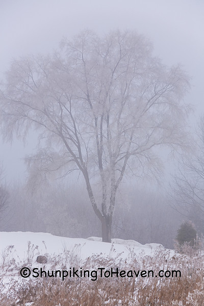 Frosty Winter Morning, Dane County, Wisconsin