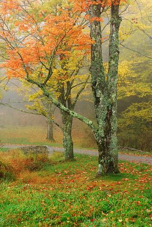 Foggy Mountain Day