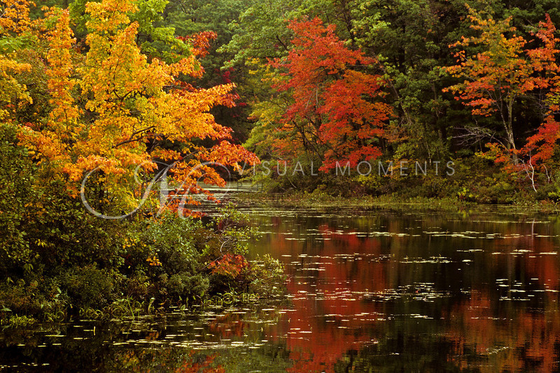 Visual_Moments_Misc_01_011_edited-4