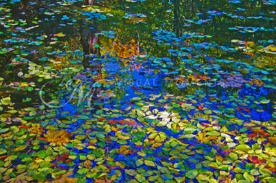 # 2180  MONET REFLECTIONS -  Secret Garden - Belknap Springs, OR