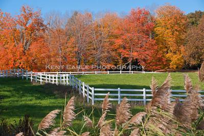 Foliage North Andover/ Boxford
