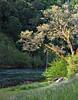electra oak