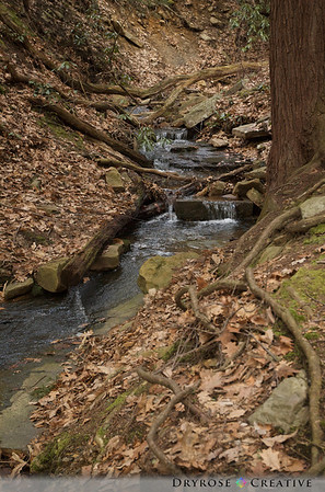 Linn Run State Park, 2008