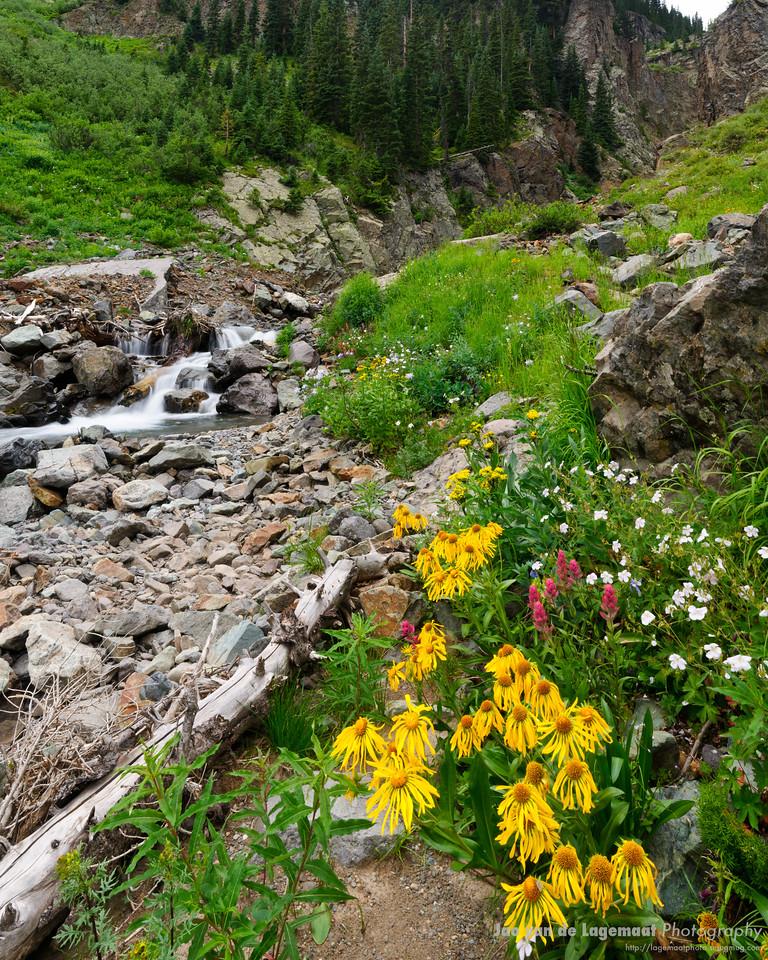 Mill Creek flowers