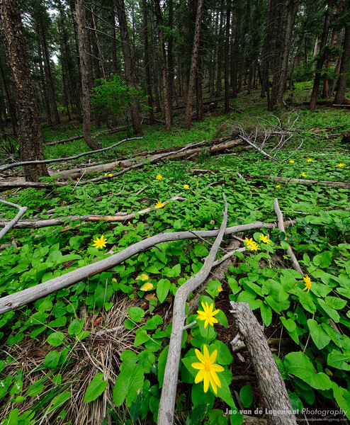 Flowers on the forest floor