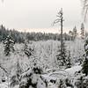 Vinterstemninger i Eldorskogen. Utsikt over plantefelt.