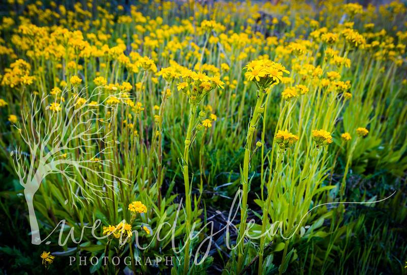 wlc Timp Flowers 050317May 03, 201724-Edit