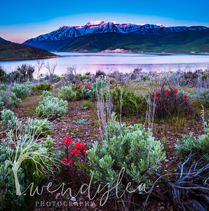 wlc Timp Flowers 050317May 03, 20175-Edit