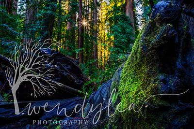 wlc Oregon Coast 032019 5352019-Edit-Edit