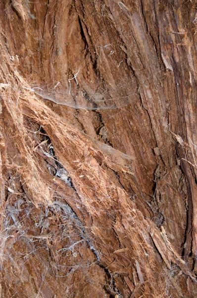 Bark Web