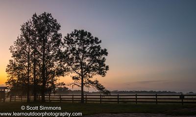 Trees at Orlando Wetlands Park