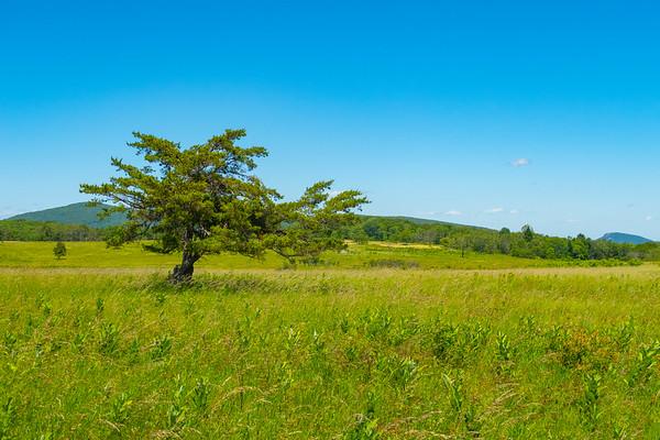 Big Meadows