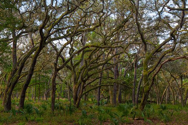 Econ River Wilderness Area