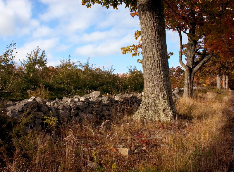 Stone wall and old trees around an orchard