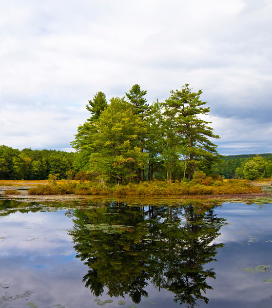 Trees in Harvard Pond Massachusetts