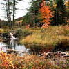 Beaver Pond in Fall Color