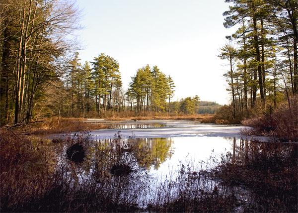 Harvard Pond reflects tall trees in Petersham Massachusetts