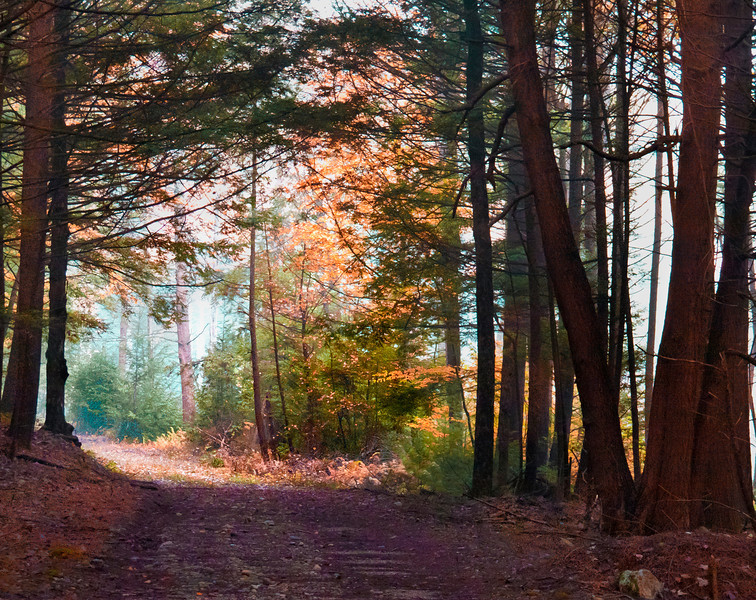 Rich Fall color with trees and leaves in Bearsden New England Massachusetts