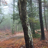 Misty woodland path in a New England forest