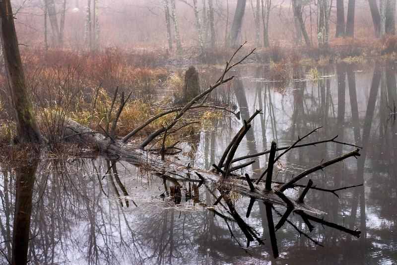 Morning mist in a New England wetland