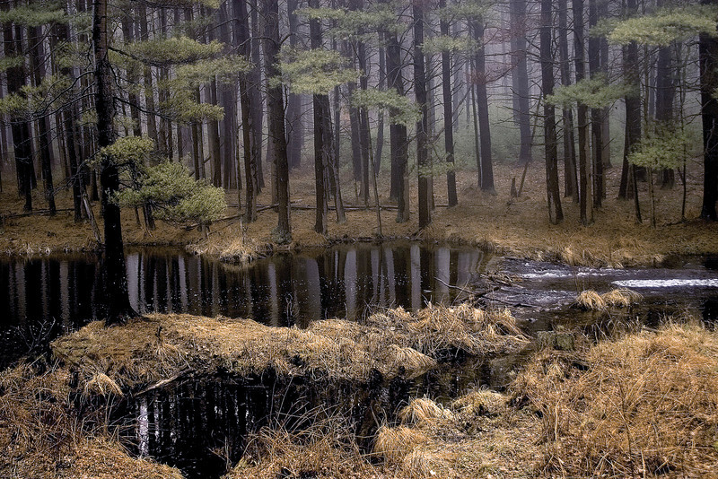 Trees reflected in melting water in Quabbin Reservoir