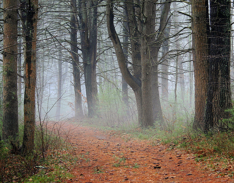 Peaceful path through mist laden trees in Quabbin Reservoir Petersham Ma.