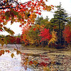 Fall colors at Harvard  Pond in New England