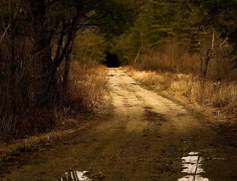 Road into a dark wood