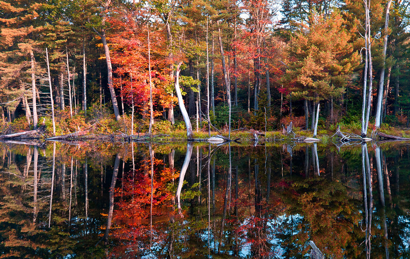Rich Fall color with trees and leaves in Bearsden New England Massachusetts with reflections in the water