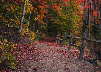 Rustic Autumn Path in the White Mountains