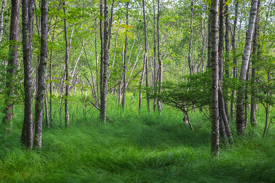 Trees and Grass On Jesup Path
