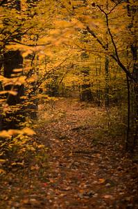 Golden Autumn Path New Hampshire