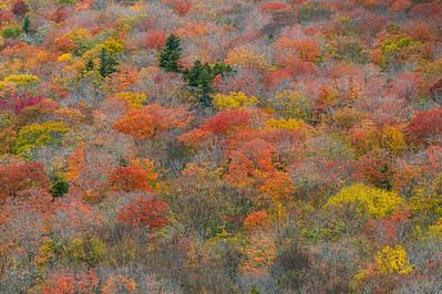 Autumn Sprinkled Tree Tops