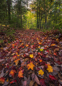 Colorful Autumn Path