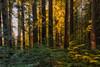 In Humboldt Redwood State Park