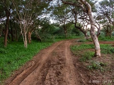 20190219 Thabazimbi Landscape
