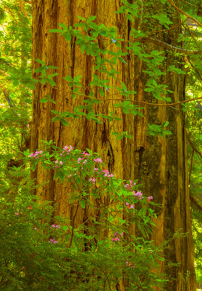 Bloom in the Woods