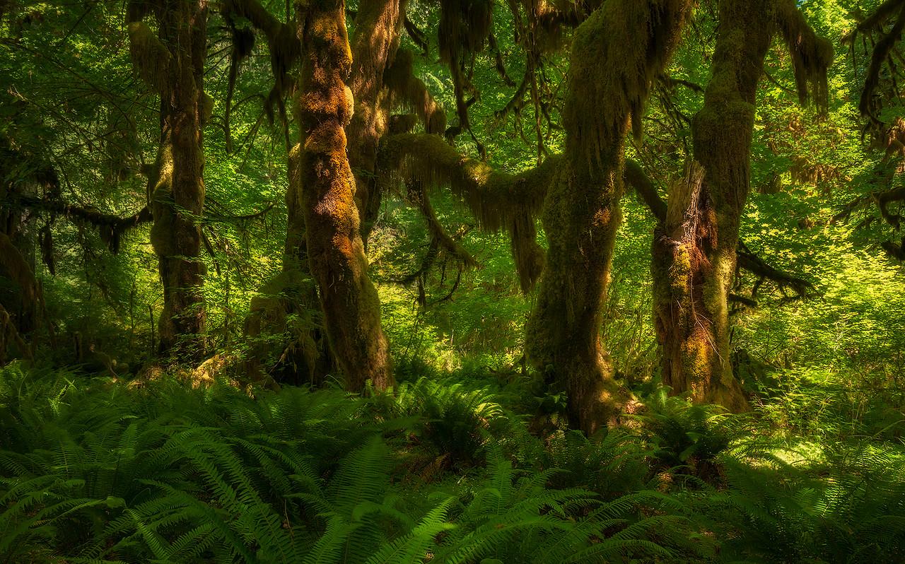 Rainforest Light