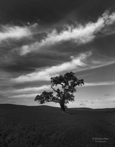 """Cirrous Tree"""