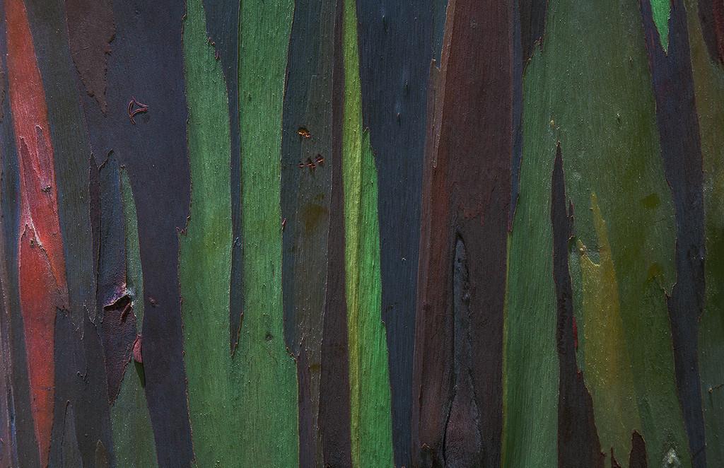 Color Pieces