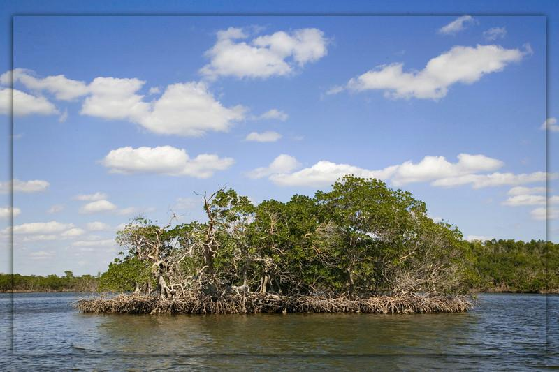 Mangrove Island...White Water Bay..Everglades National Park
