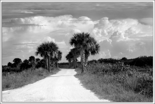 Merritt Island National Wildlife Refuge....Titusville, Florida<br /> A section of Black Point Wildlife Drive on a summer morning. Already the cumulus clouds are building which will disturb the serenity later in the day.