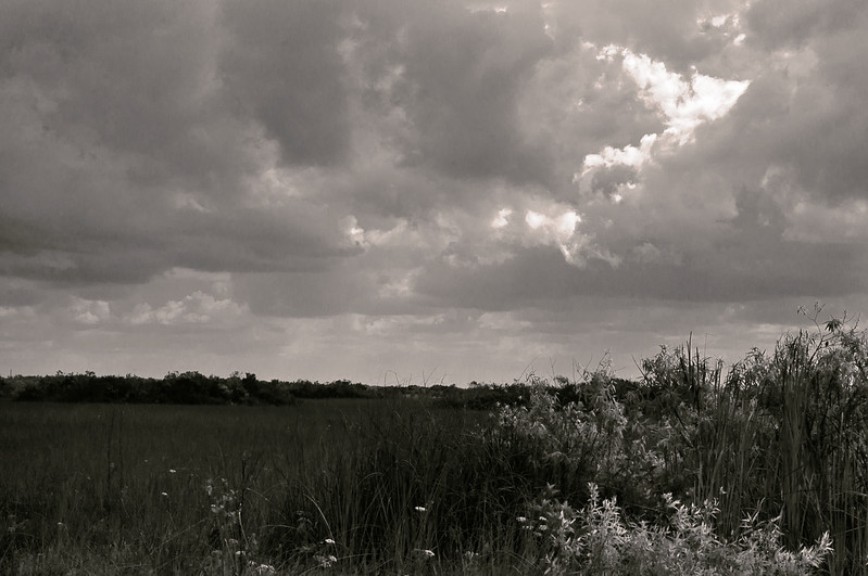 Another B&W Shark Valley cloud study; Everglades National Park