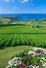 Porto Formoso tea plantation, Ribeira Grande, Sao Miguel, Azores